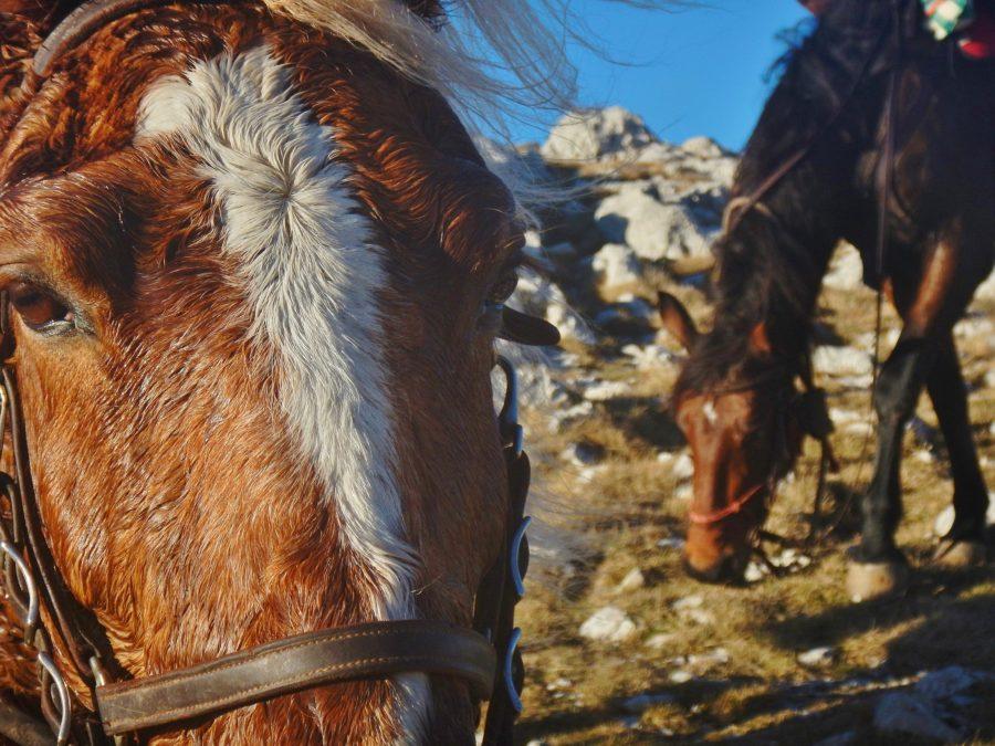 cavalli compagni di viaggio