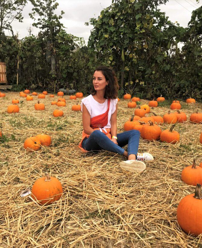pignataro maggiore pumpkin patch